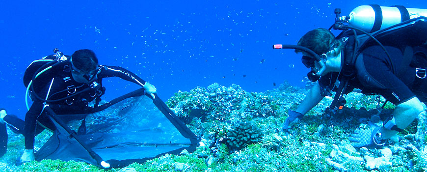 Divers collecting fish in a net on the seafloor
