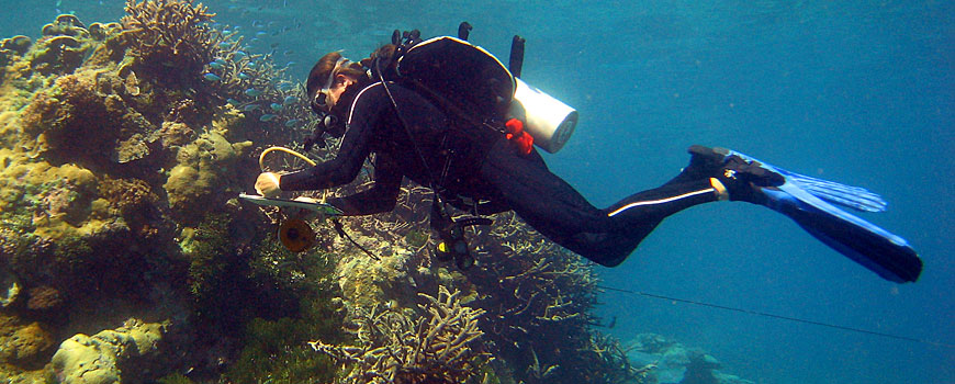 Diver Dr. Stuart Sandin floating over coral reef with clipboard.
