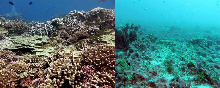 coral reef health