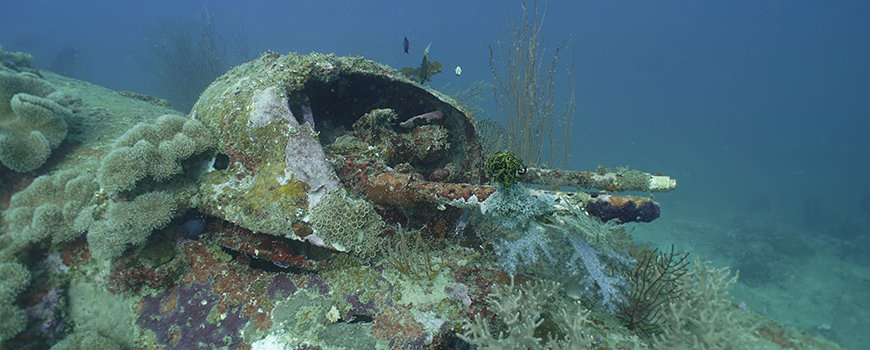 Gun turret of sunken World War II B-25 off Papua New Guinea