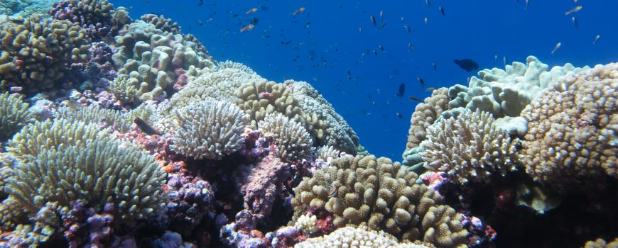 A coral reef in the Central Pacific. PC: Mike Fox