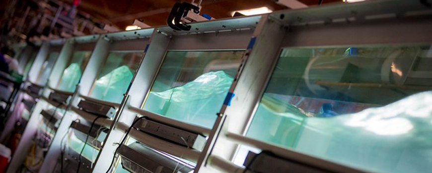 Interdisciplinary SeaSCAPE project utilizes large wave tank to look at how human pollution is affecting the ability of ocean biology to control clouds and climate