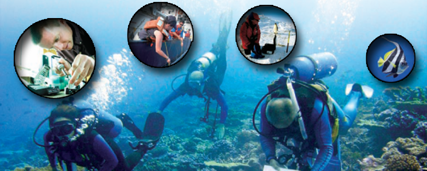 Graphic showing divers and other oceanographic careers