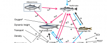 A schematic representation of the generalized Southern California Current System food web model