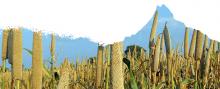 Silhouette of grain plants in the shape of a mountain range