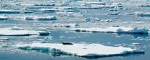 Sea ice photo by Lihini Aluwihare