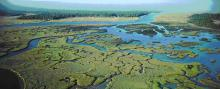 Greenery among wetlands, photo courtesy NOAA