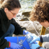 Scripps scientists take collections of huge gels from the Adriatic Sea.